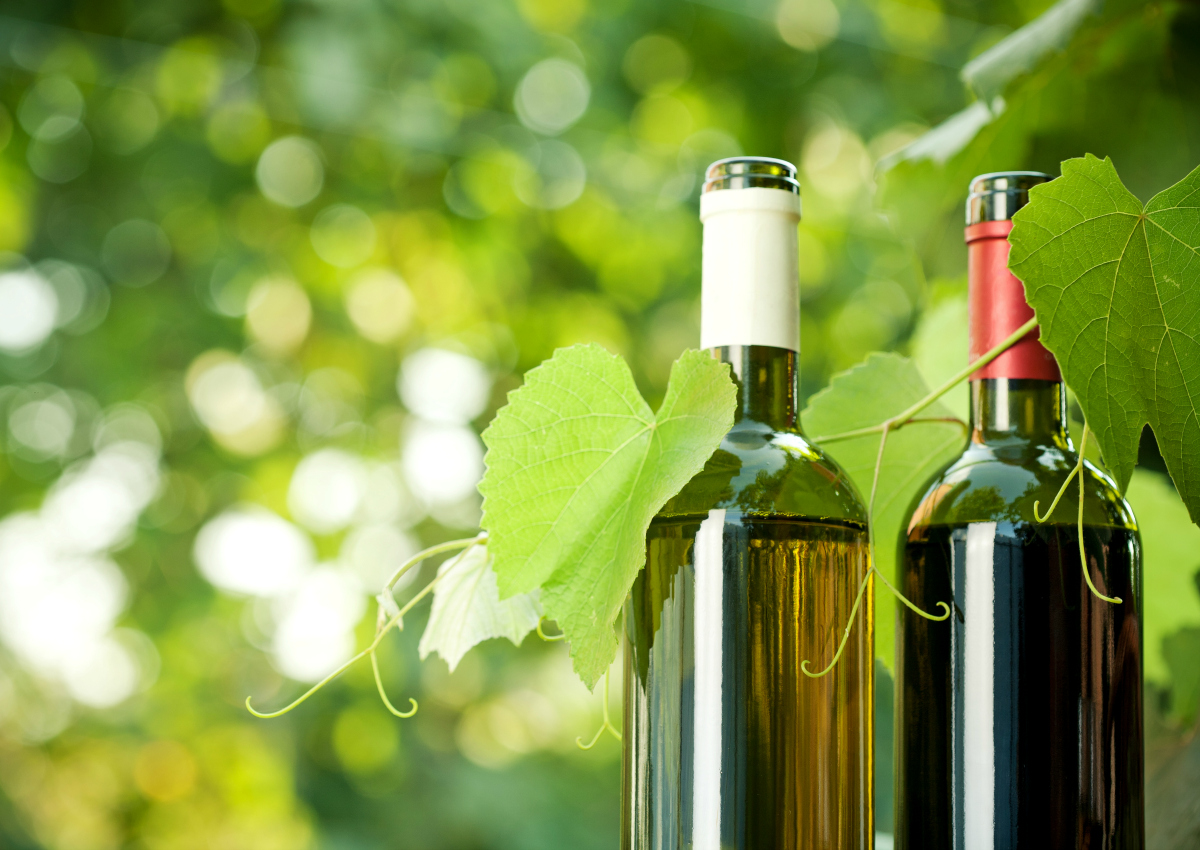 Italian organic wine: exports are booming