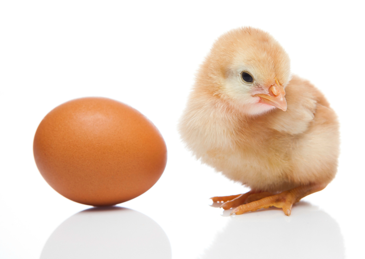 Eggs: Italy becomes net exporter