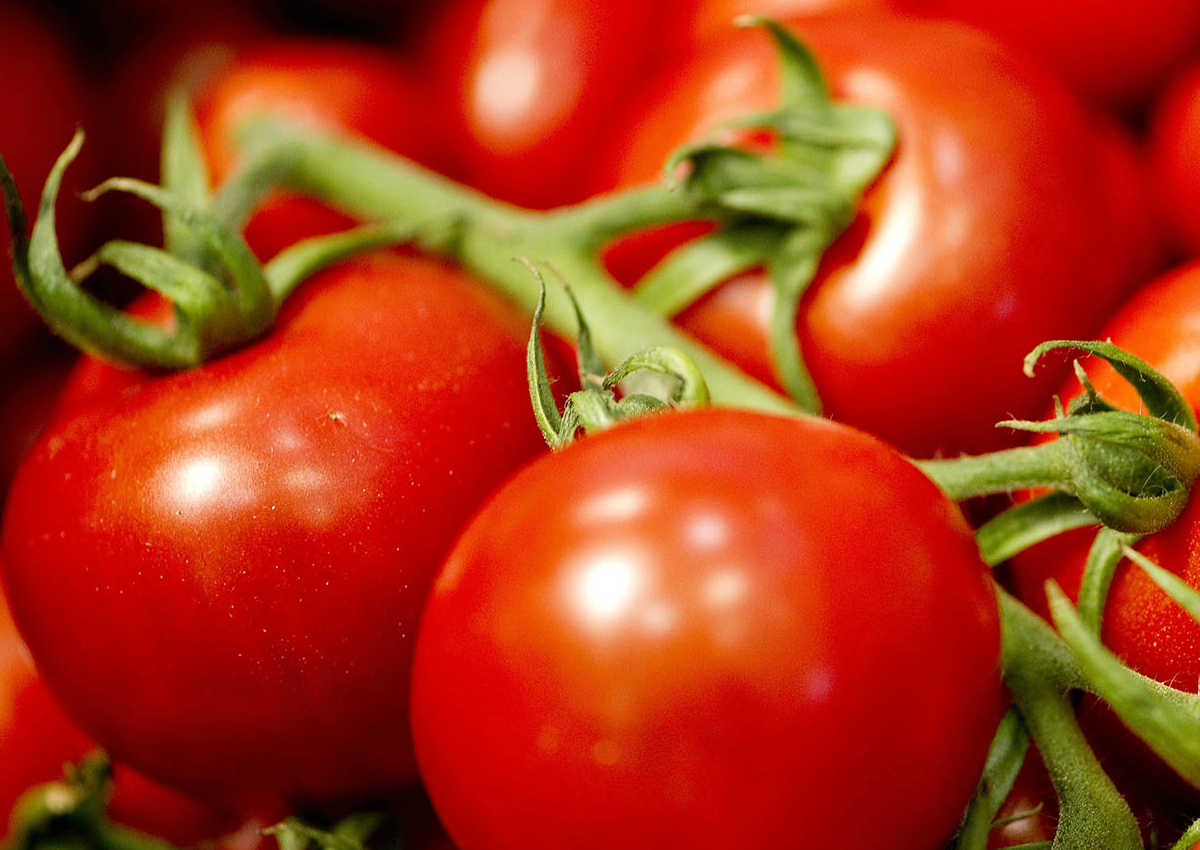 Tomato, it's time for the labeling of origin