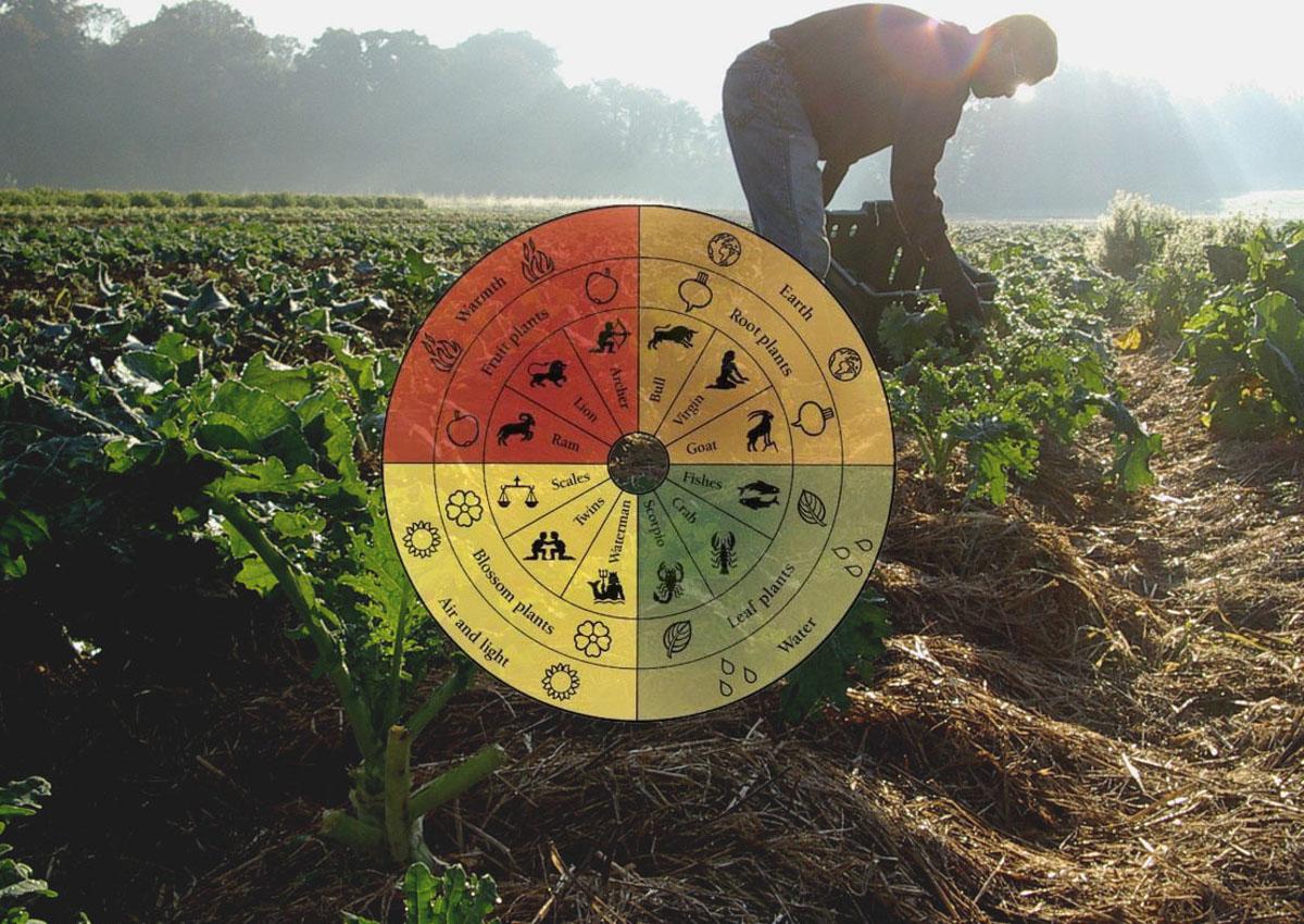 The rise of biodynamic agriculture - Italianfood.net