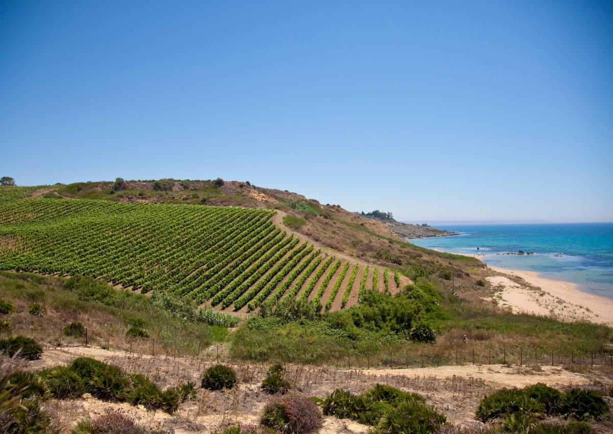 Settesoli Bio: Sicilian wine goes organic