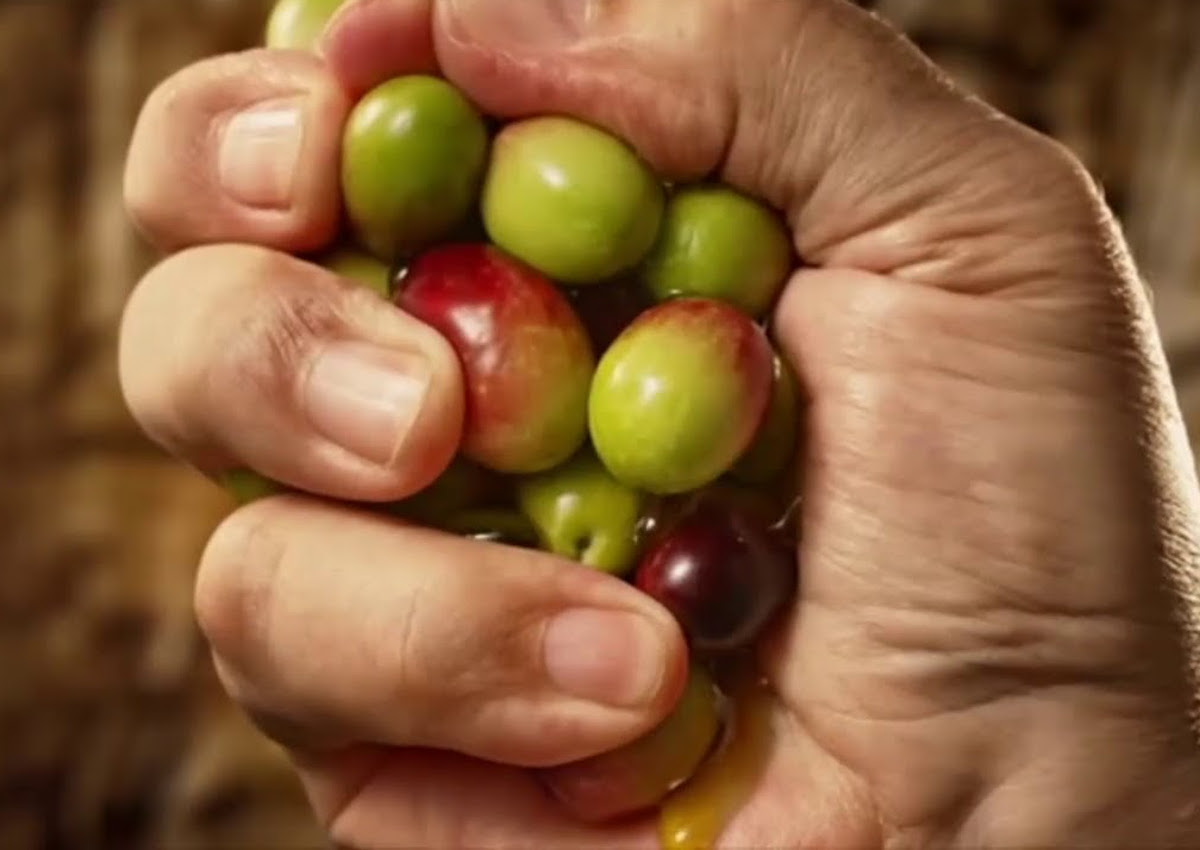 Monini-olives