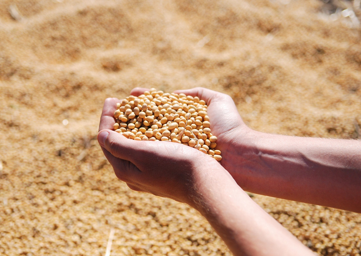 How Soybean Crisis Helped US-China Trade Truce