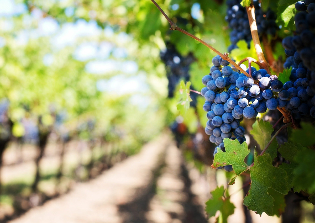 Tariffs, why Italian wines are at risk in the USA